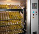Заказать Примем яйца на инкубацию ( до 90 тыс. шт.)