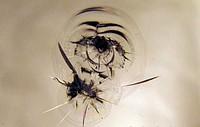 Order Repair of cracks on autoglass Ternopil, the Ternopil region