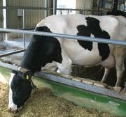 Order Energy saving production technologies, preservation and preparation of forages for feeding