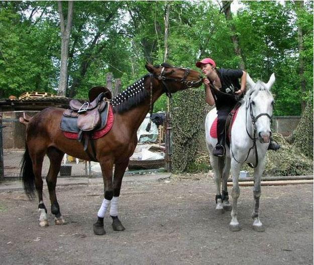 Заказать Конные прогулки, прогулки на лошадях (Кременчуг Полтавская область)