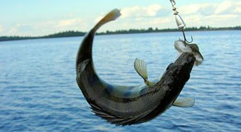 Заказать Рыбалка Кременчуг, рыболовный отдых Кременчуг