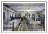Order Reconstruction of pigsties and the equipment for pig factory farms in Ukraine team of experts from Dnipropetrovsk