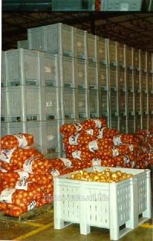 Vegetable storehouse, fruktokhranilishche, warehouse of seafood, refrigerator of fish, meat. Construction, design, business plan