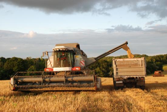 В Таджикистане собрано свыше 645 тыс. тонн зерновых