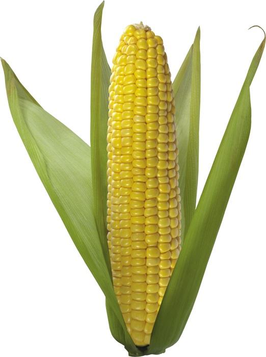 Заказать Выращивание и реализация зерновые культуры
