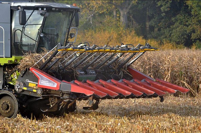 Урожая пшеницы в Украине хватит и для экспорта, и для внутреннего потребления