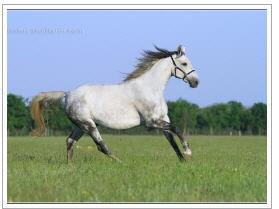 Заказать Фотосъемки лошадей - предпродажная, рекламная, художественная Предметная фотосъемка в Украине, Белгород-Днестровский