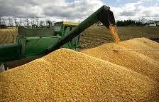 Заказать Заготовка, сушка, хранение, калибровка кукурузы