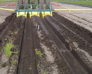 Заказать Опыт внедрения интенсивных технологий выращивания земляники в южных регионах Украины