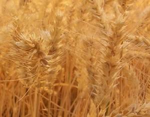 Замовити Комплекс послуг з експедування зернових і олійних залізничним транспортом