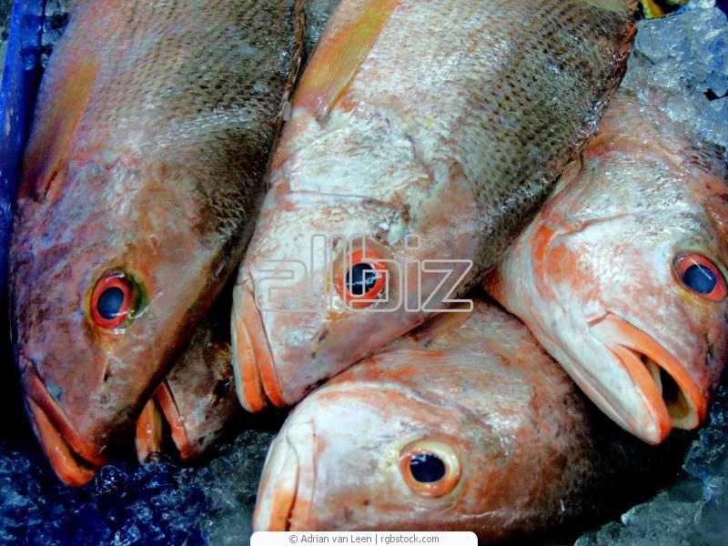 Заказать Заморозка рыбы