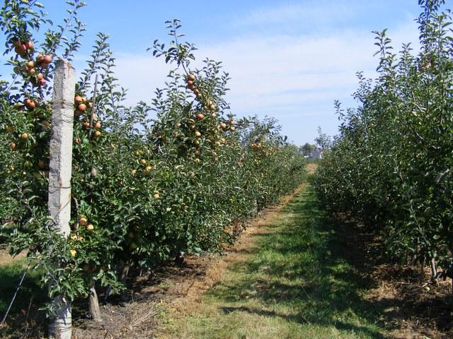 Заказать Посадка деревьев и кустарников, обрезка, формировка, защита от вредителей и болезней