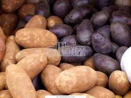 Заказать Оптовая продажа семян картофеля сортового