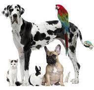 Заказать Диагностические исследования ветеринарные