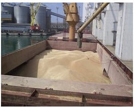 Order Services surveyor and inspection - inspection grain