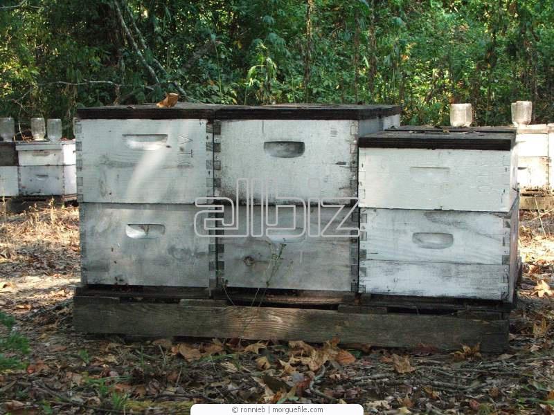 Заказать Содержание пчел в ульях