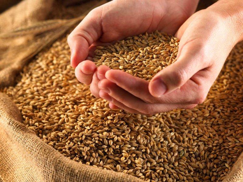 Заказать Хранение зерна Украина