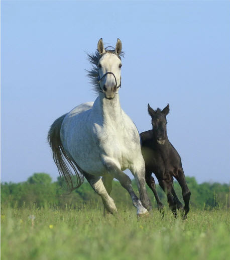 Заказать Продажа племенных лошадей Конный завод Статус в Украине