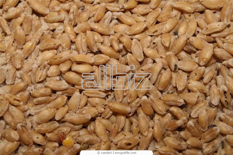 Заказать Экспорт зерна и зерновых культур