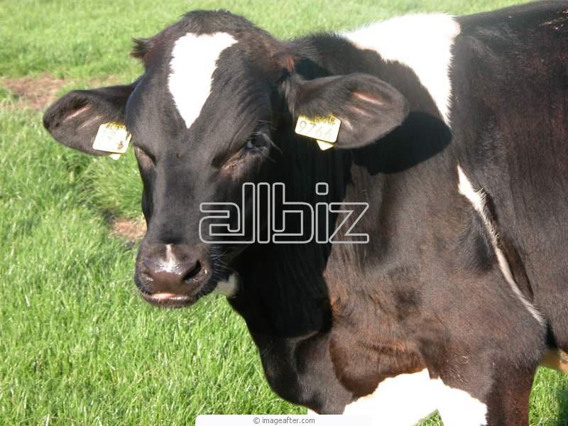 Заказать Перевозка живых животных, домашнего скота
