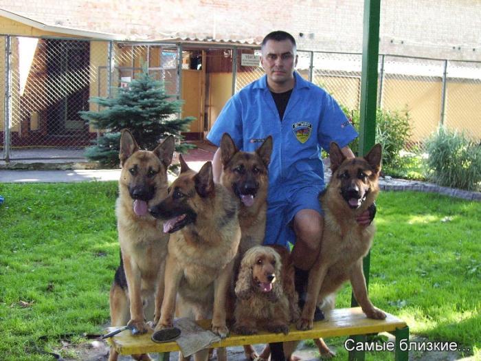 Заказать Дрессировка и воспитание собак