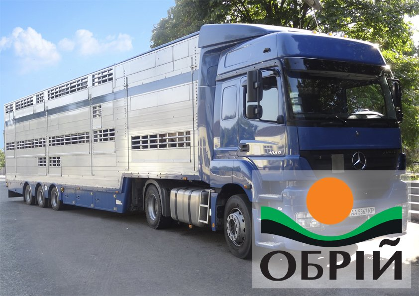 Order Transportation of pigs by the PEZZAIOLI eurocattle truck. Transportation of KRS (cattle).