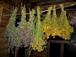 Заказать Измельчение трав лекарственных, коры, плодов, корней