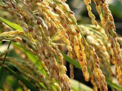 Заказать Переработка сельхозпродукции.