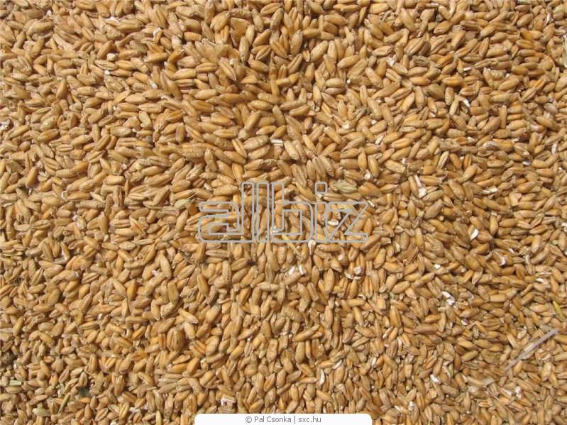 Заказать Переработка зерна гречихи и пшеницы