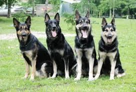 Заказать Разведение собак элитных пород
