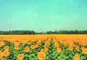 Заказать Семеноводческие хозяйства Украины, Агрофирма НПА Земледелец, оригинатор 9 сортов с / х культур