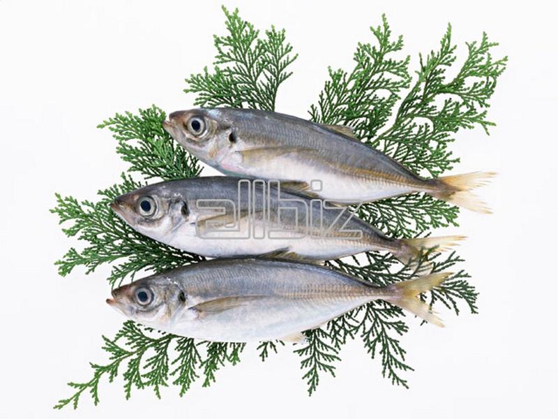 Заказать Разведение пресноводной рыбы, рыбопосадочный материал