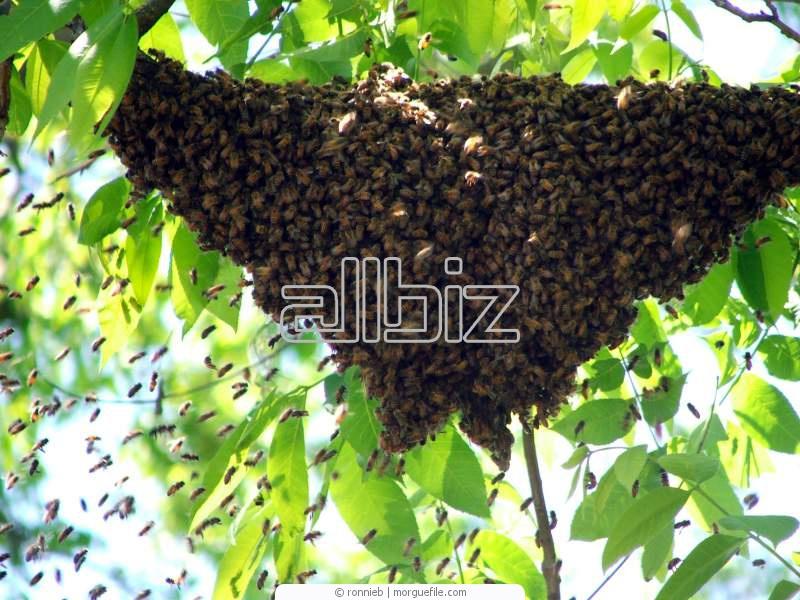 Заказать Массовая селекция пчёл