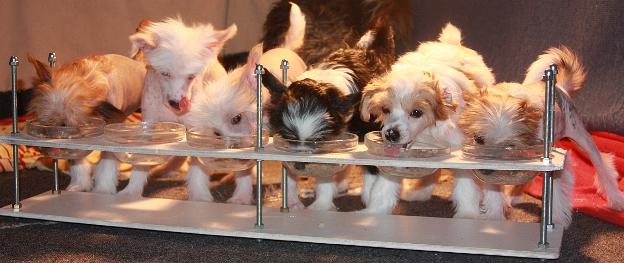 Изготовление регулируемых столовых для щенков