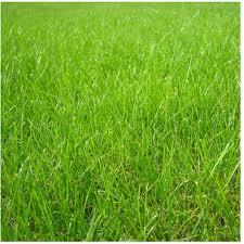 Заказать Посев семенного газона