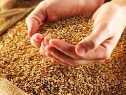Заказать Экспедирование зерновых и масличных культур