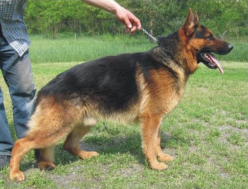 Заказать Дрессировка собак, обучение, консультации, воспитание