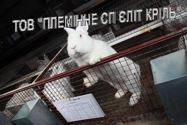 Оборудование клеточное для кролиководства, Бровары