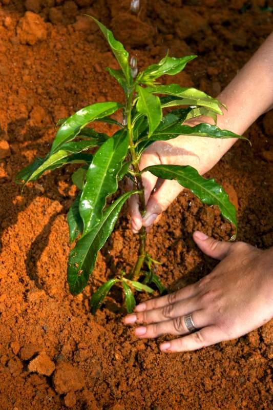 Заказать Посадка растений
