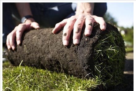 Заказать Создание газона
