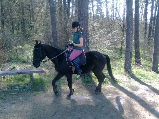Заказать Перевозка лошадей Черкассы, коневоз