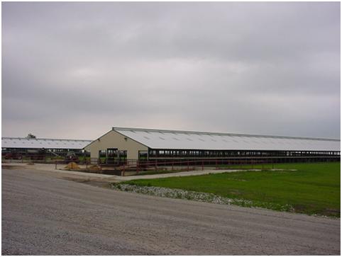 Заказать Разработка проектов реконструкции и строительства ферм и комплексов для производства молока