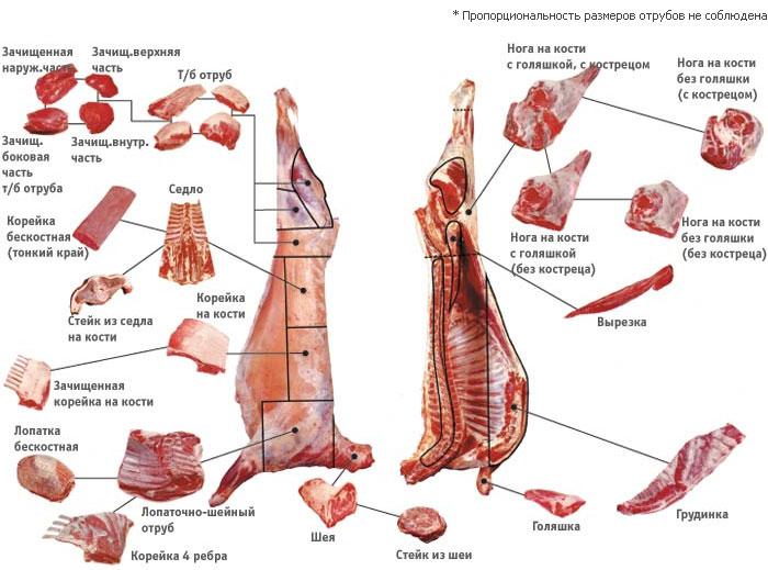 Заказать Поставки баранины живым весом, мясо барашка, туши бараньи