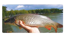 Заказать Рыболовство в реках, озерах, водохранилищах, прудах - КАРП