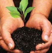 Заказать Посадка деревьев и кустарников