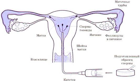 skolko-stoit-sdat-v-ukraine-spermu