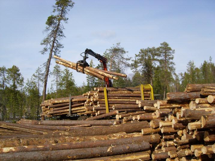 Заказать Лесозаготовка. Приемлемые цены