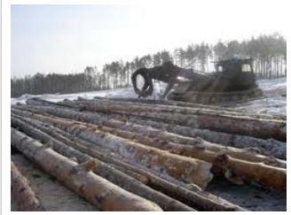 Заказать Сортиментная лесозаготовка