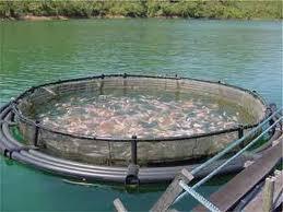 Заказать Разведение пресноводной рыбы. Украина. Экспорт