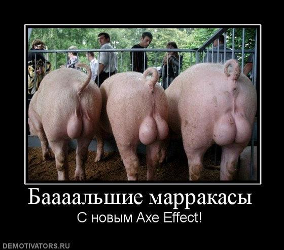 Заказать Осеменение свиноматок